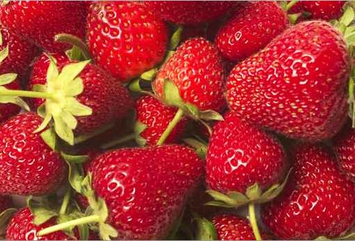 Erdbeeren: leckere Früchtchen