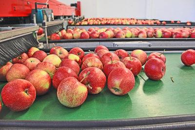 Apfelsortieranlage