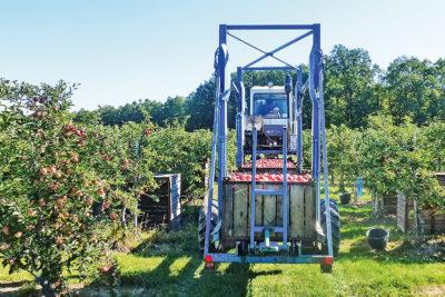 Transport der Apfelkisten zum Sammelplatz