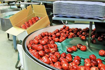 Apfelverpackungsmaschine