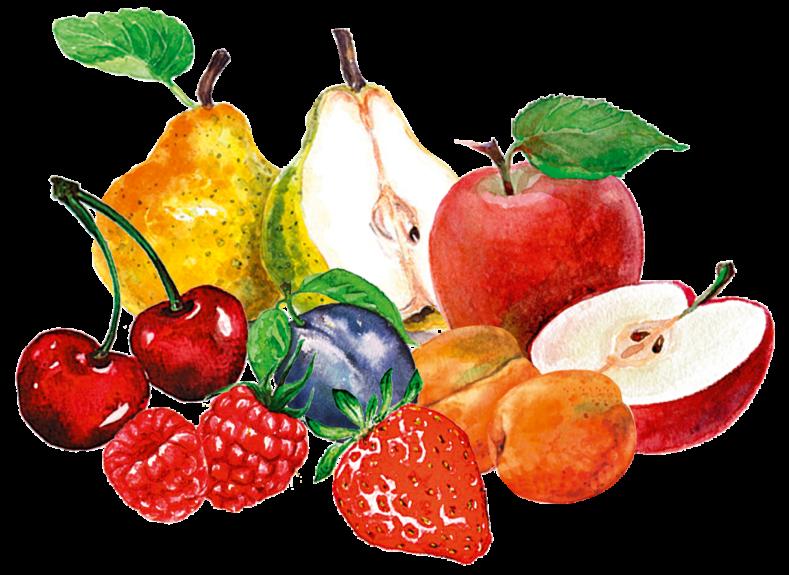 Illu Stilleben Früchte
