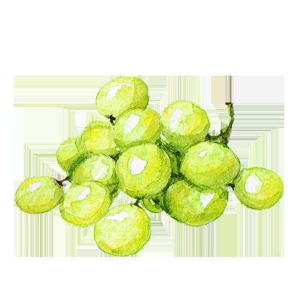 Trauben weiß